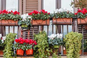 Fiori per Terrazzi e Balconi a Marostica