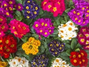 Garden fiori e piante a Marostica VicenzaFloricoltura Tres