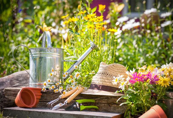 Piante da giardino aromatiche e sementi Floricoltura Tres a Marostica
