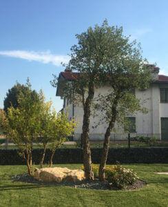 Piante da giardino da esterno Floricoltura Tres a Marostica