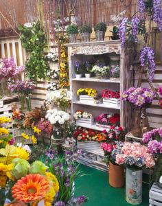 Piante da interno Floricoltura Tres a Marostica