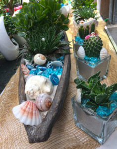 Piante da interno Floricolture Tres a Marostica