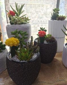 Piante da interno Garden Tres a Marostica
