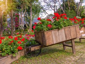 Servizio Giardini Garden Tres Marostica