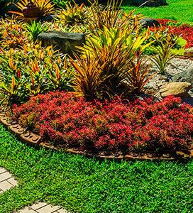 piante da giardino a Marostica